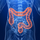 Colon and  Rectum higlighted in xray